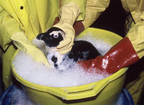 Dyan DeNapoli Penguin